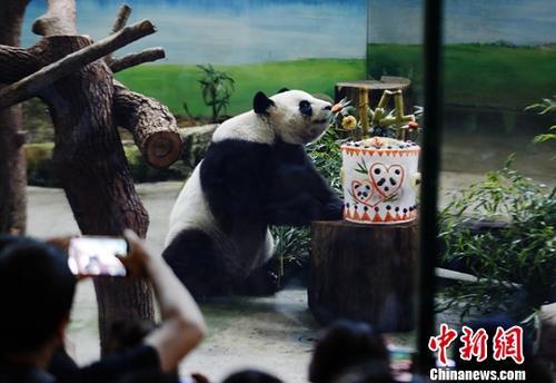"""8月30日,大熊猫团团、圆圆在位于台北木栅的市立动物园迎来14岁""""生日宴""""。中新社记者 杨程晨 摄"""