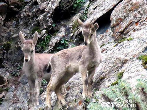 久美扎西拍摄的野生动物。