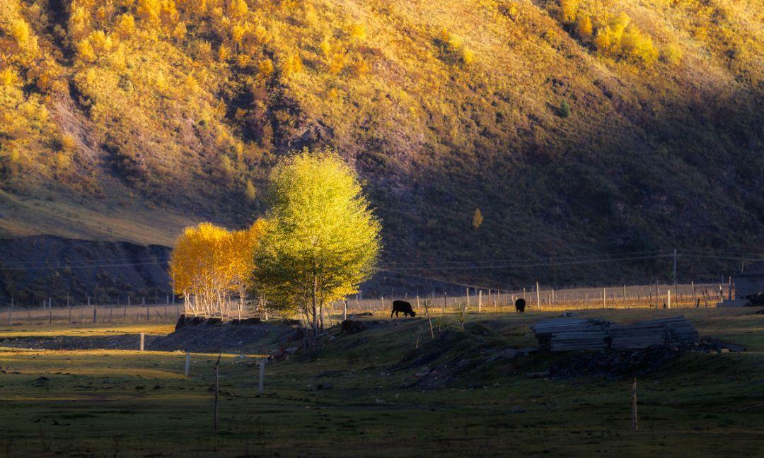 将大自然的色彩运用的淋漓尽致 by 图虫网天啊行者 色彩斑斓的秋天