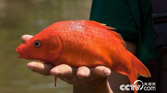 美丽中国乡村行:鱼米之乡寻鱼 9月12日