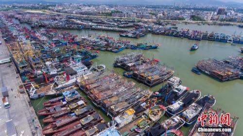 9月15日,海南三亚崖州中心渔港停靠着众多回港避风的渔船。中新社记者 骆云飞 摄