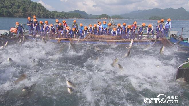 丰收中国 乡土颂丰年 节庆篇 9月24日