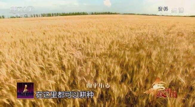 阳光大道:丰收中国--欢聚天中 9月24日