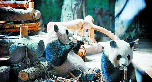 """今年国庆,灵玲动物王国""""国宝大派对""""值得期待."""