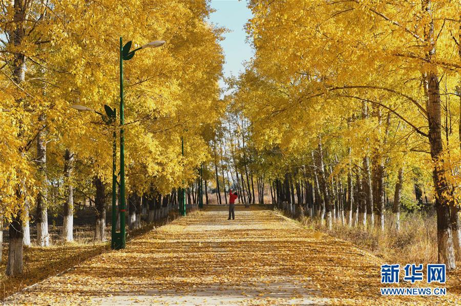 呼伦贝尔市,内蒙古自治区下辖地级市,以境内呼伦湖和贝尔湖得名。2012年7月9日入选国家森林城市,2017年12月当选中国十佳冰雪旅游城市。市境内的呼伦贝尔草原是世界四大草原之一,被称为世界上最好的草原,是全国旅游二十胜景之一。