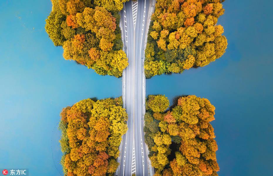 2018年9月,航拍入秋后的杭州西湖杨公堤,风景如画。