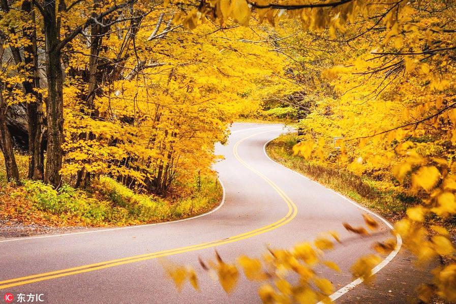 """日本北海道。提到北海道,人们对它的印象似乎都是""""漫山遍野覆盖皑皑白雪""""的一片白茫茫的记忆。其实你殊不知,北海道同样拥有者醉人的秋天,不仅有红色的枫叶,还有顶级的温泉,绝对称得上是新人首选的蜜月胜地。"""