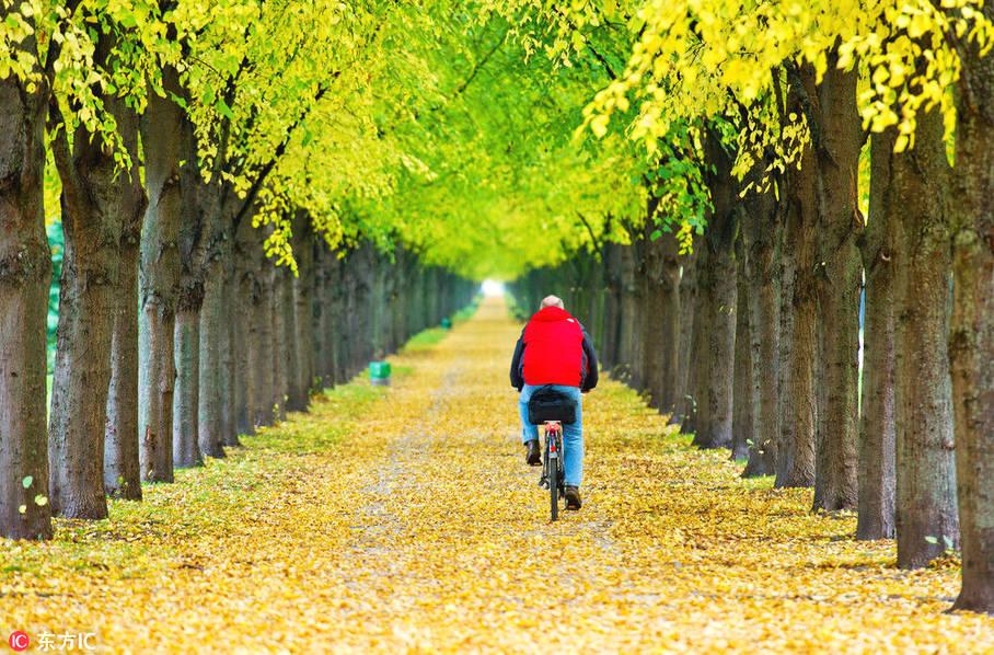 德国汉诺威,一名骑车者经过秋意浓浓的果园。