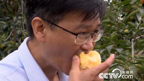 这个柿子脆而不涩 你不了解一下吗
