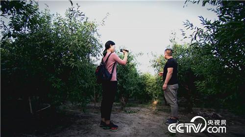 乡土:寻味中国 山东 10月19日