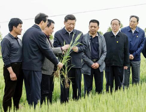 安徽小岗村:敢闯敢试 农村改革激发新活力