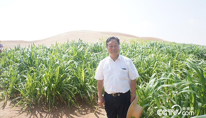 2013年4月开始探索用菌草治理流沙,现取得了系列的国际领先成果,为黄河生态安全屏障建设提供科学依据和适用技术。林教授在阿拉善菌草治沙现场。