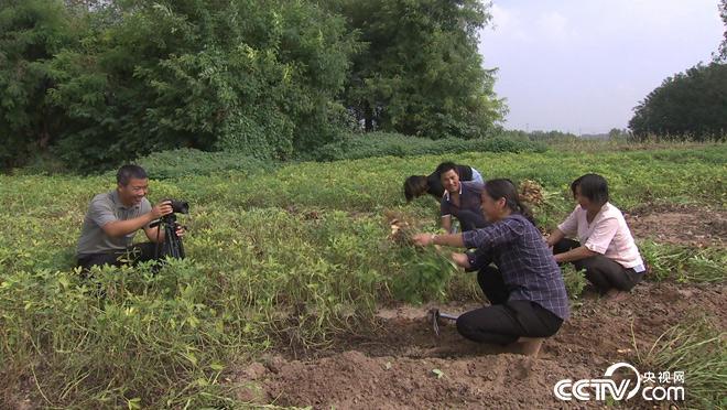 乡土:寻味中国 河南 10月25日