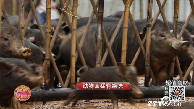 [食尚大转盘]动物凶猛有绝味 20181028