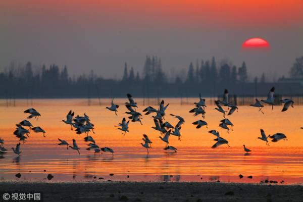 湖南省岳阳市,越冬候鸟在东洞庭湖国家级自然保护区振翅齐飞