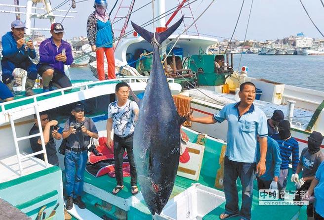"""渔民自救会将到台北游行抗议台当局的渔业政策,却被""""渔业署""""指为政治操作。图为东港捕获第一鲔的画面。(图片来源:台湾""""中时电子报"""")"""