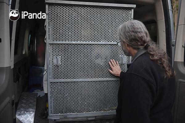 """美国圣地亚哥动物园饲养员和大熊猫""""高高"""""""
