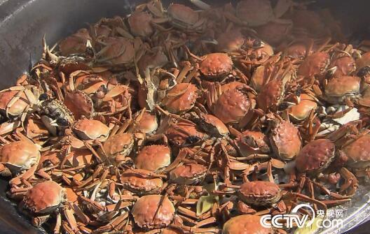 美丽中国乡村行:乡村振兴看中国--稻蟹之乡丰收之旅 11月5日