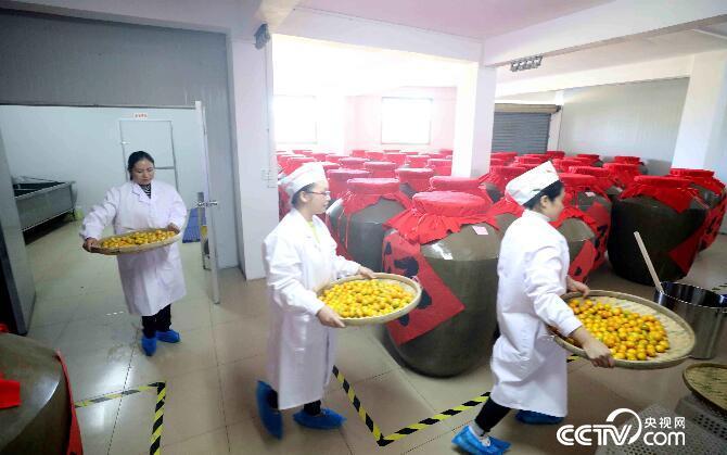生产车间,工人在酿制金桔酒。(谭凯兴 摄)