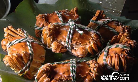 美丽中国乡村行:乡村振兴看中国--鱼米之乡无为鲜味多 11月14日