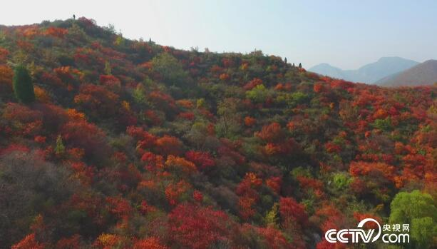 美丽中国乡村行:乡村振兴看中国--红遍长寿山 11月15日