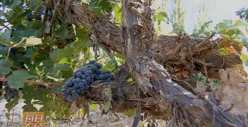 56prom精品视频在放葡萄