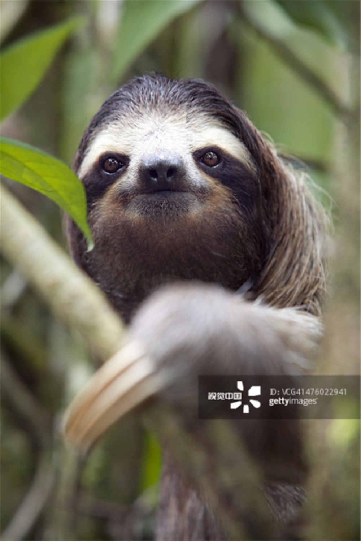 米,是世界上动作最慢的哺乳动物.