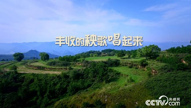 乡土:丰收的秧歌唱起来 11月20日