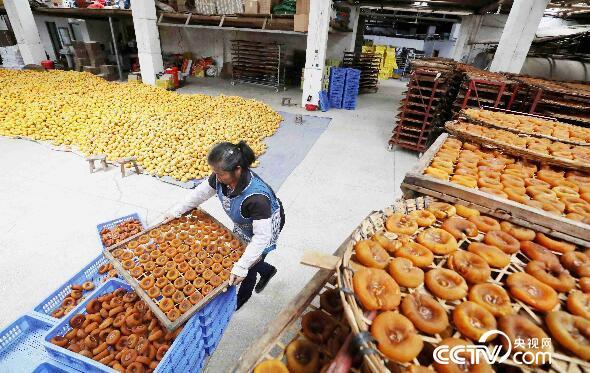 在广西桂林恭城瑶族自治县莲花镇竹山村,农民在加工柿饼。(谭凯兴 摄)