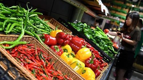 资料图:蔬菜