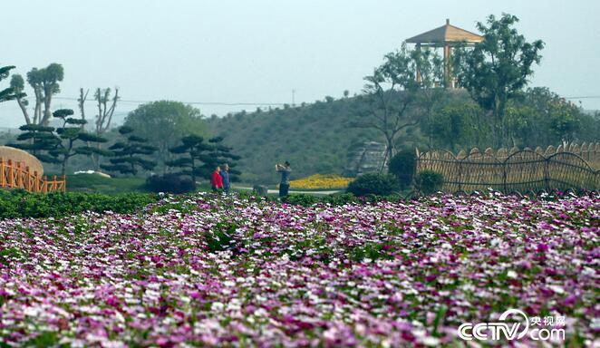 游客们徜徉在百花园中