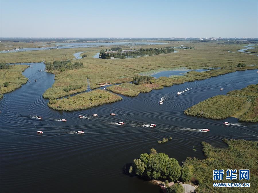 游船穿梭在河北雄安新区境内的白洋淀景区(10月1日无人机拍摄)。新华社记者 李鑫 摄