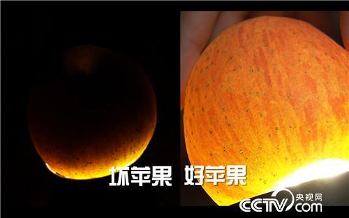 致富经:丑苹果价高 全靠一刀 12月6日