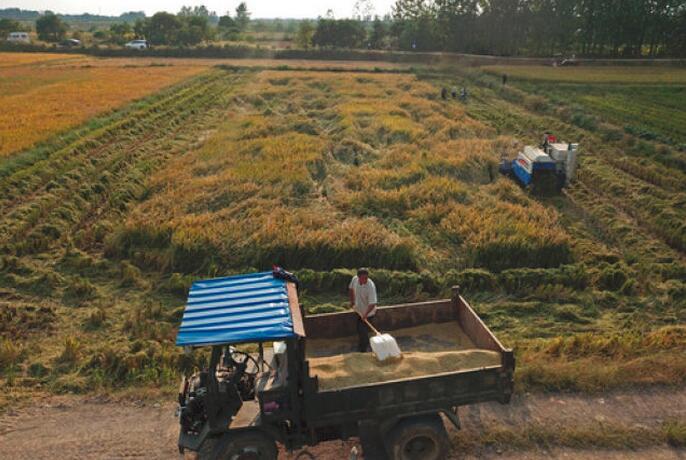 农民在安徽凤阳县小岗村一处稻田收割(9月27日无人机拍摄)。新华社记者 才扬 摄