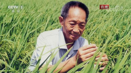 杂交水稻研究的开创者 袁隆平