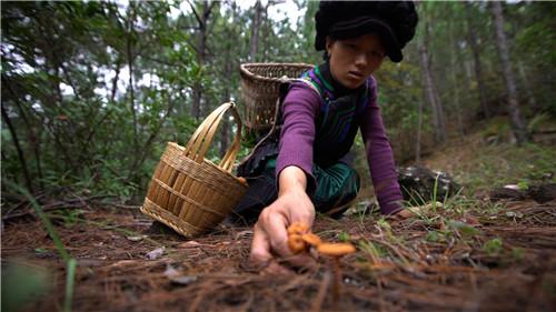 推动乡村振兴 中国农民在幸福的奋斗中继续前行