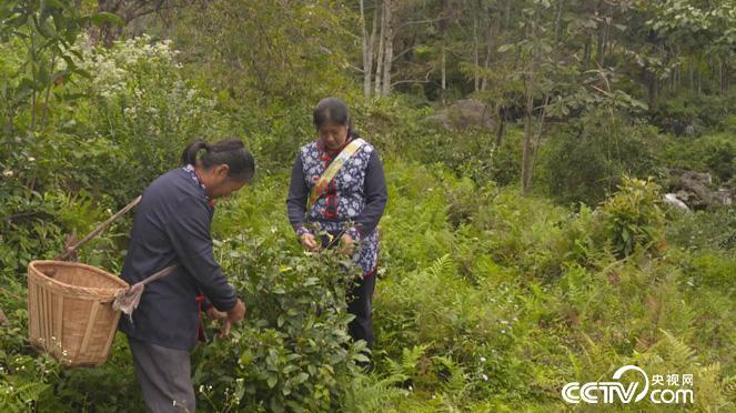 乡土:人与生物圈计划在中国 第四集 善用 12月27日