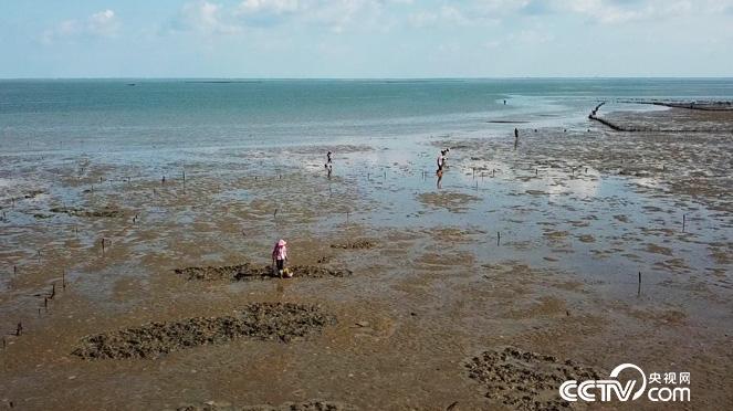 乡土:人与生物圈计划在中国 第五集 相伴 12月28日