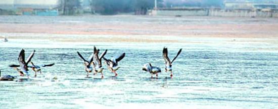 云南香格里拉纳帕海自然保护区的黑颈鹤。光明图片/视觉中国