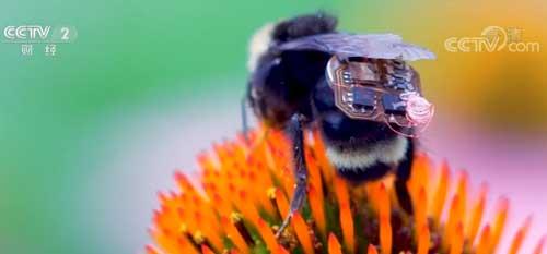 """蜜蜂""""背包""""轻松实现农作物分析与监测"""