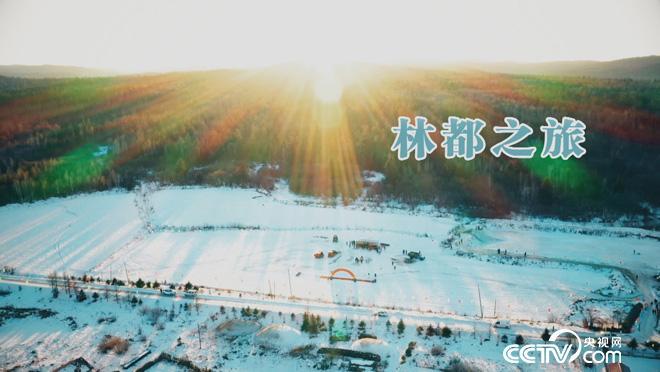 乡土:林都之旅 1月15日
