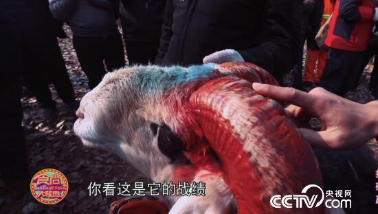 食尚大转盘:食尚滋补季之猛羊猛味 1月20日