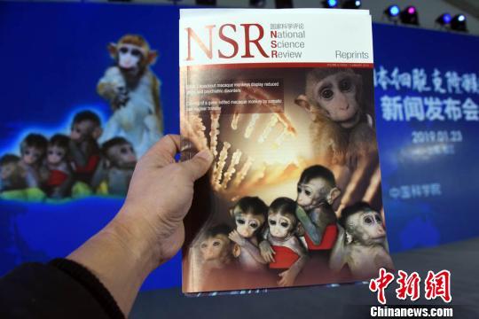 新闻发布会上,中国顶级综合英文期刊《国家科学评论》提前印刷的世界首例生物节律紊乱体细胞克隆猴模型成果专刊。 孙自法 摄