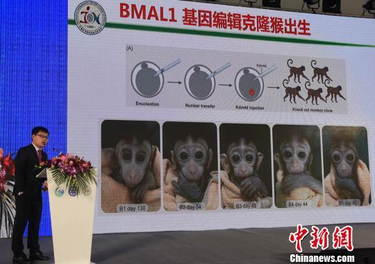 """中科院神经科学研究所研究员刘真介绍""""体细胞核移植技术克隆基因敲除猴模型""""成果。 孙自法 摄"""