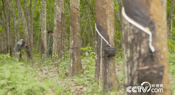"""绿色时空:趁机从树上""""捞油水"""" 3月10日"""
