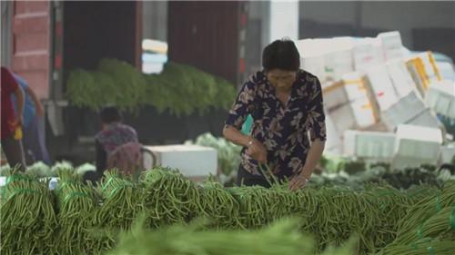 紧盯市场 她带领社员种的蔬菜一直不愁卖