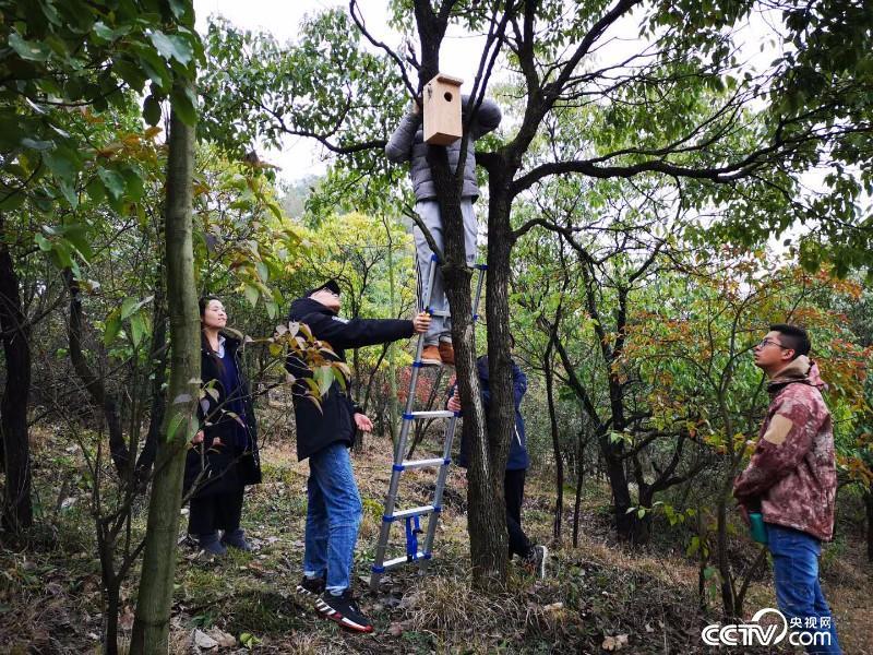 工作人员安装人工鸟巢。(图由张海波提供)
