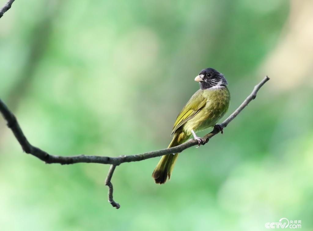 湿地公园内珍惜鸟类。(图由张海波提供)