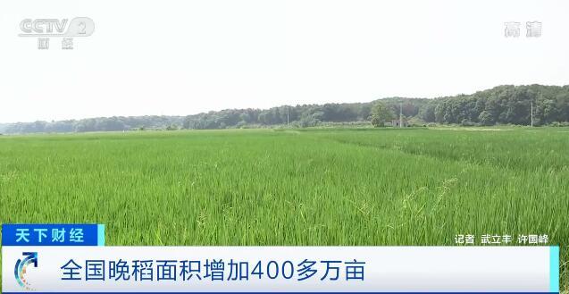 保障粮食安全!今年全国晚稻面积增加400多万亩