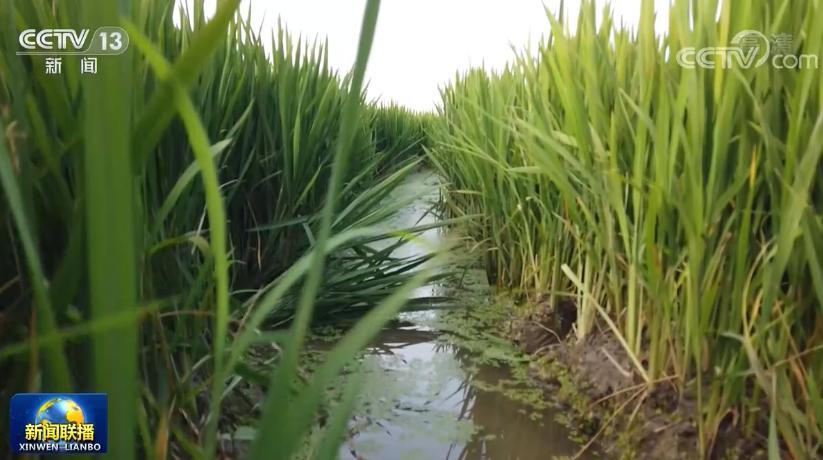 全国人大常委会执法检查组在江苏山东检查土壤污染防治法实施